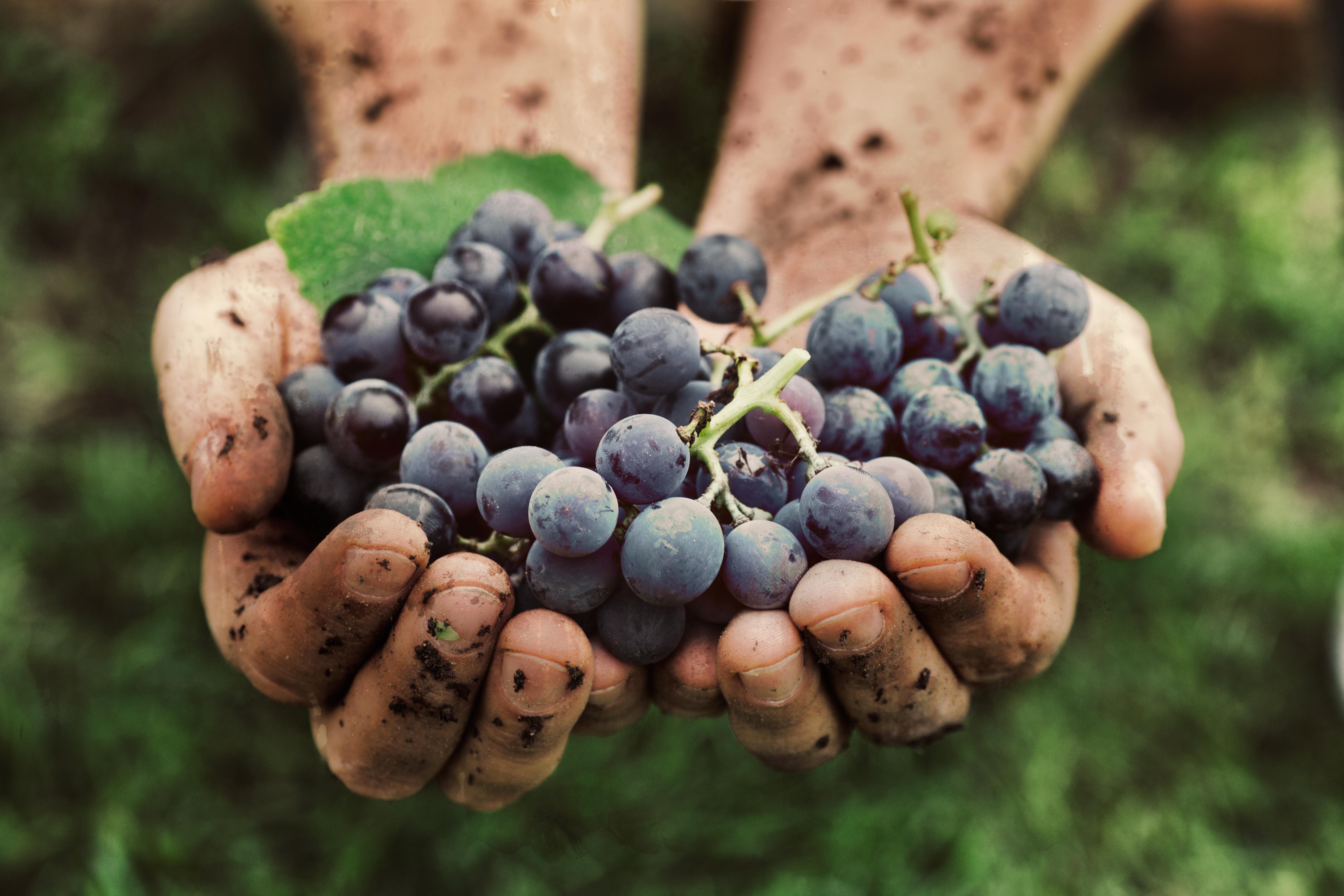 Malé slovenské vinárstva